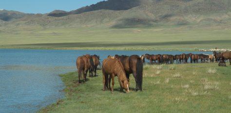 Mongolia, Trekking in the Wild West