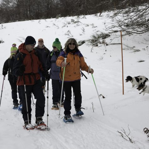 Snowshoeing, in the Pyrenees