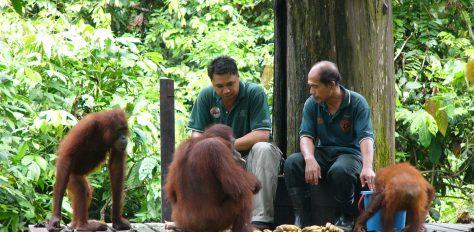 Kinabalu, Trekking & Survival Skills