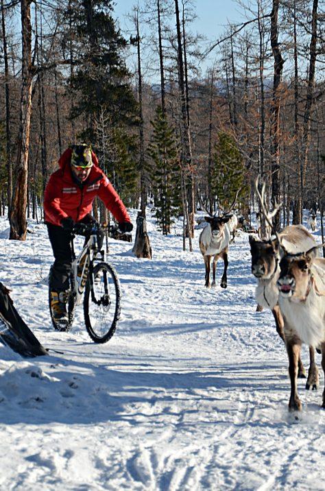 Biking with Reindeer, Mongolia Winter Wonderland