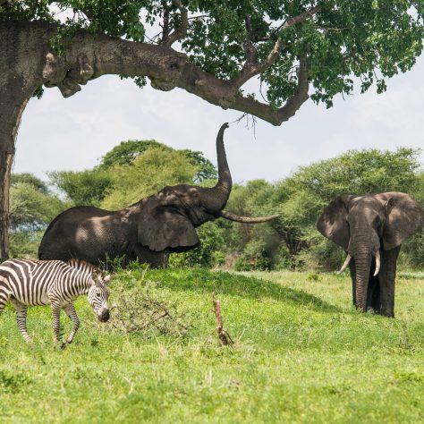 Kilimanjaro - Safari Extension